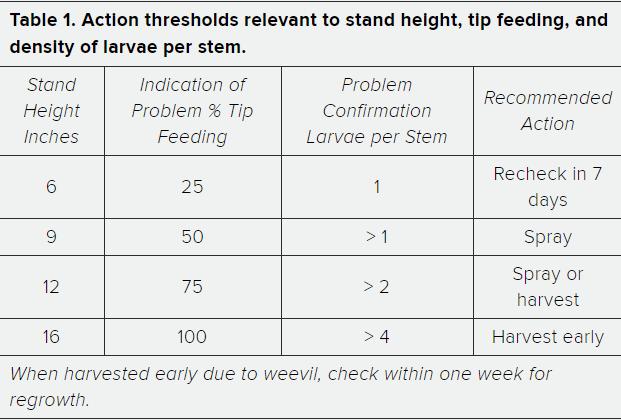 Alfalfa Weevil Thresholds